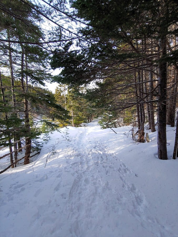 Most of the East Coast Trail is accessable in the Winter