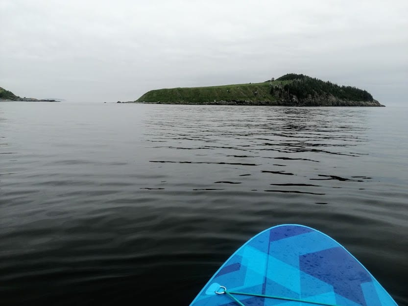 Fox Island is the first island you'll encounter when paddling from Tors Cove Wharf and the first destination for most paddleboarders and kayakers exploring the Witless Bay Marine Ecological Reserve's main islands.
