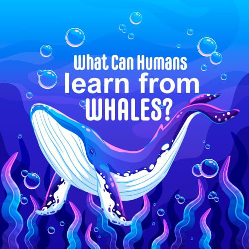 Whales often have this captivating facade that often leaves humans in awe of who they are. Majestic and elusive, it makes us wonder if there's more to whales than just their appearances and migration patterns.