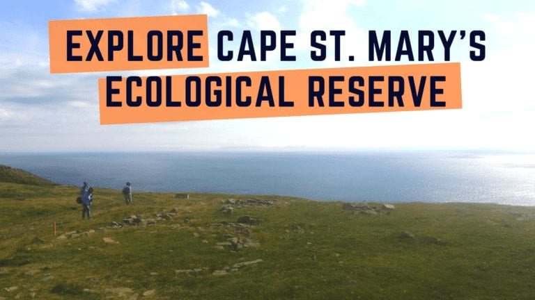 Explore the birds of Cape St. Mary's Ecological Reserve